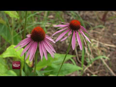 Residential Rain Garden Initiative