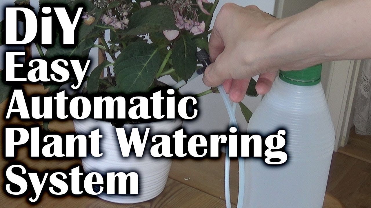 How To Water Your Plants Automatically Diy