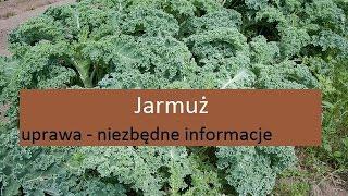 Jarmuż - uprawa