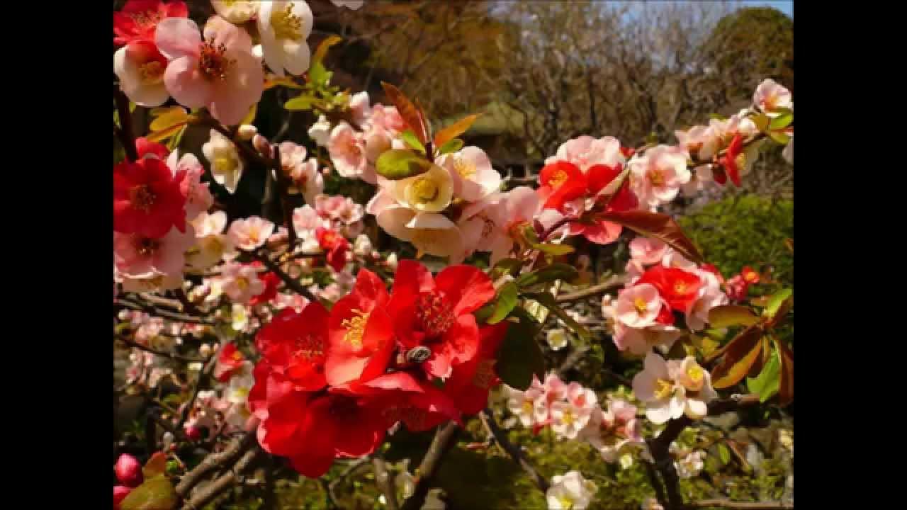Jardin d\' Eden - Garden of Eden. Song by Mark Geary - Adam & Eve ...