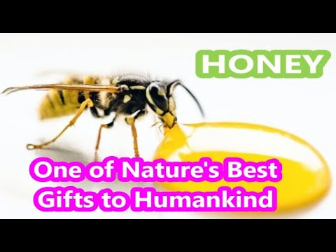 honey---the-best-treatment-for-bad-ailments
