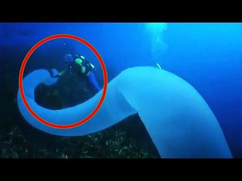 10 Strangest Ocean Phenomena on Earth