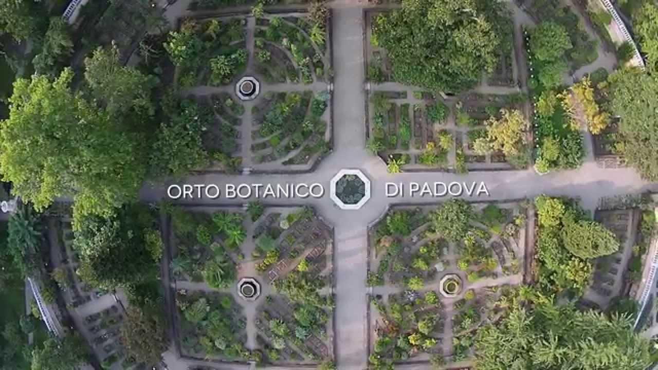 Il giardino delle naiadi orto botanico di padova il giardino