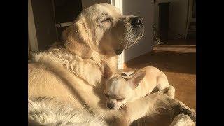 Как привезти собаку в Европу