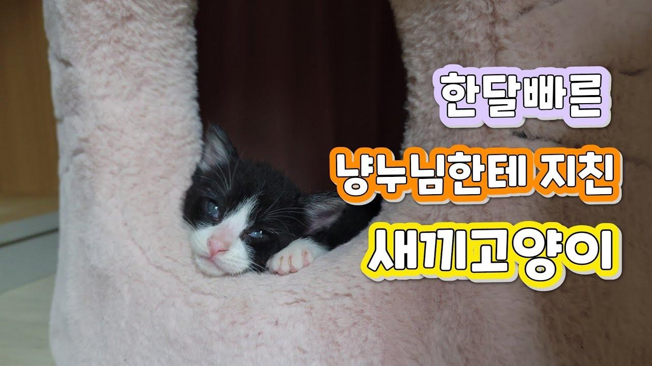 촐싹대는 냥누님 때문에 피곤한 새끼고양이