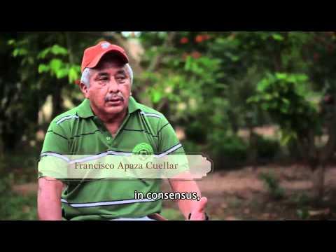 Castana (nuez amazónica) Manuripi