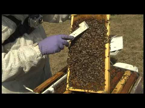 How in the World do Bees Make Honey?