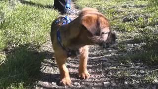 Buddy's First Walk