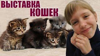 ★Самые красивые КОШКИ★ Милана на Международной выставке кошек★ International Cat's Show ★