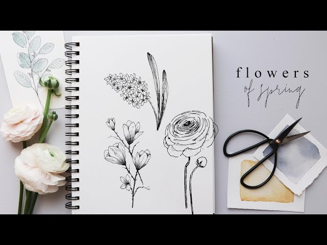 How to Draw Flowers | Step By Step Hyacinth, Magnolia and Ranunculus