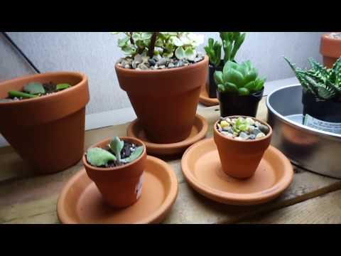Cactus Grow Light Update - Cacti and Succulent Mini Tour