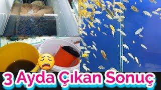 aquarium cleaning, aquarium fish, Fish species,cichlid birth,Cichlid Aquarium,guppy
