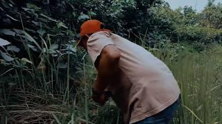 Hantu Rimba Penguasa Hutan Belantara From Youtube - The