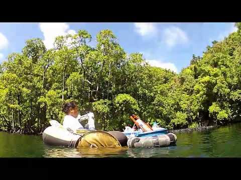 Palau - A visit to Jellyfish Lake