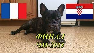 Чаки Предсказатель: ЧМ 2018 Франция - Хорватия (ФИНАЛ)