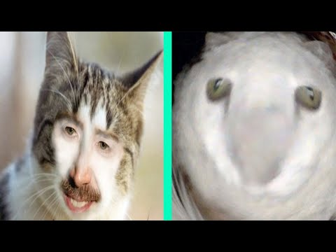 BEST DANK CAT MEMES COMPILATION OF NOVEMBER 2020 #2 | Funny Cat Compilation