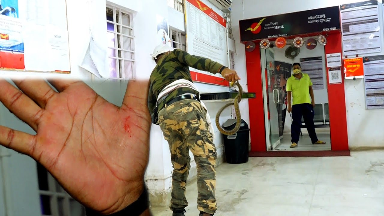 पोस्ट ऑफिस से सांप के रेस्क्यू के समय हुआ बड़ा हादसा,देखे कैसे काट लियाRat snake at post office.