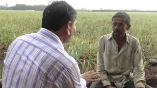 Garlic Crop Saved by Plantonics | Organic Fertilizer | Gujarat Bio Organics | India