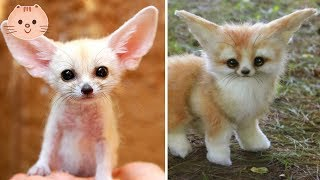 Cute Baby Animals Video Compilation Cute Moment Of The Animals - Cute Baby Animals #4 | Cute Dose