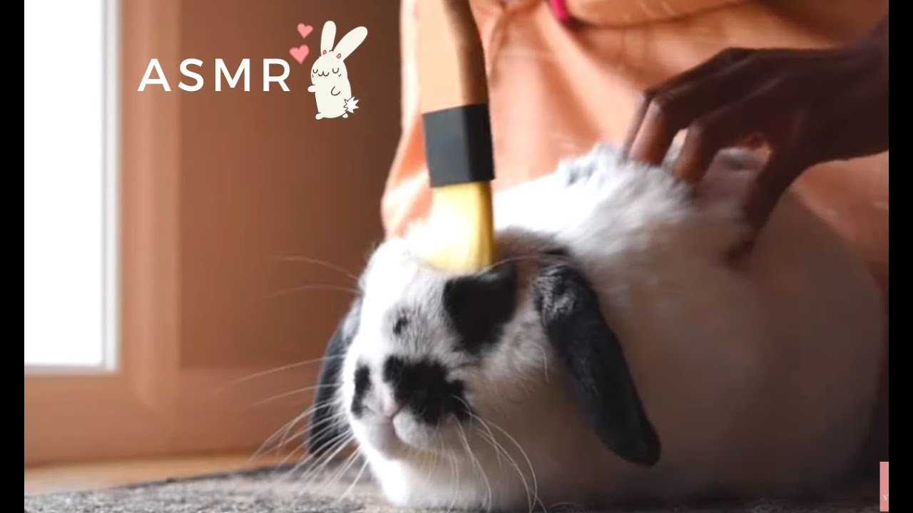 ASMR🐰 Put you sleep with GABY🐰 Scratching, rabbit eating crunchy vegetables