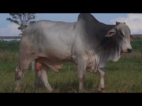 LOTE 174   GPO A 3516