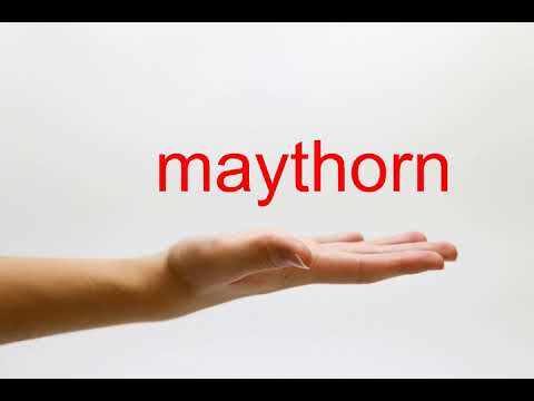 How to Pronounce maythorn - American English