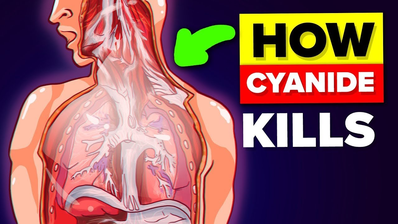 How Does Cyanide Poisoning Actually Work