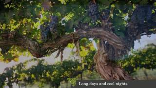 Mercer Estates Winery Video 2017