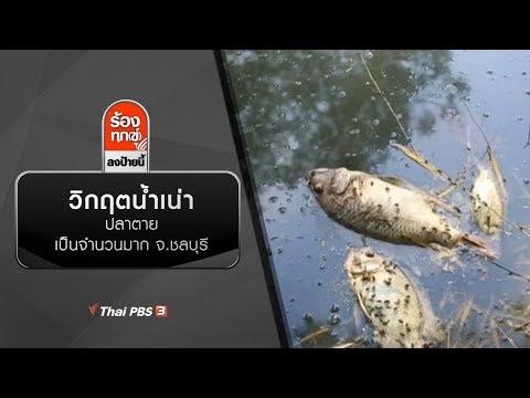 วิกฤตน้ำเน่าปลาตายเป็นจำนวนมาก จ.ชลบุรี - วันที่ 26 Dec 2019