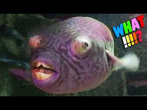 WORLD'S UGLIEST FISH - AQUARIUM TOUR EP.1