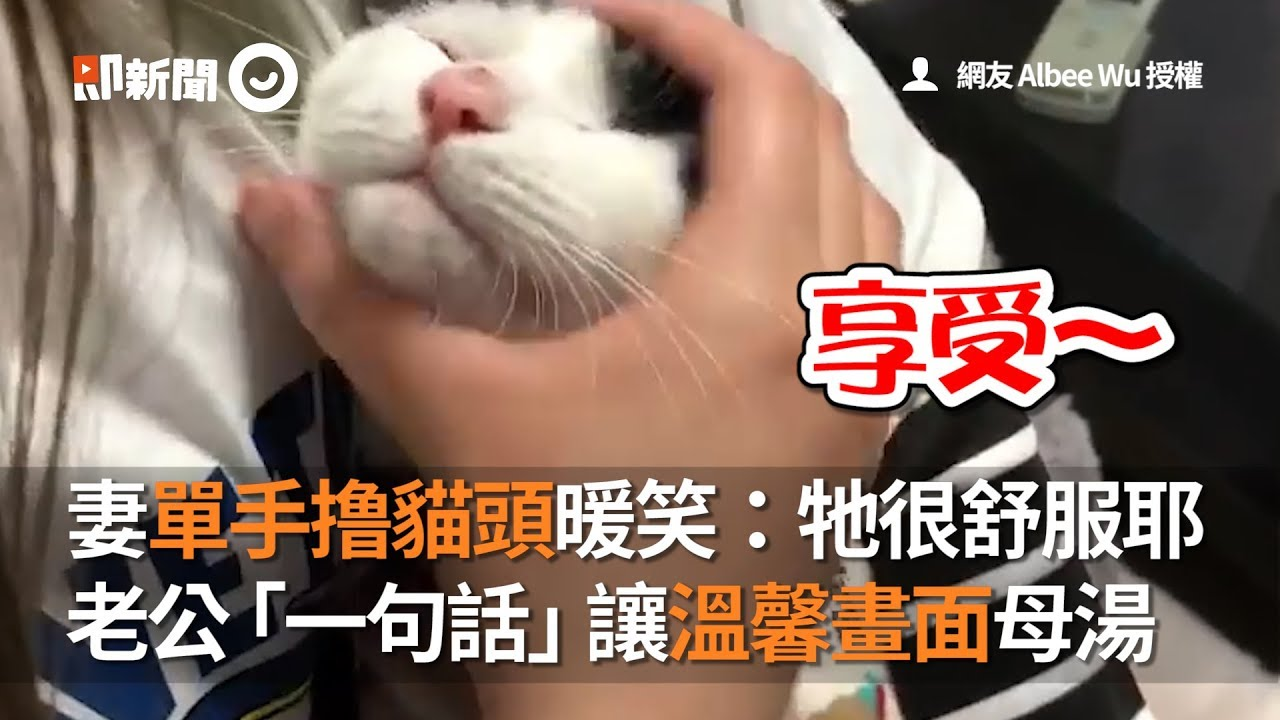 妻單手擼貓頭暖笑:牠很舒服耶 老公「一句話」讓溫馨畫面母湯 - YouTube