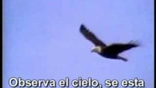 Vuela Aguila