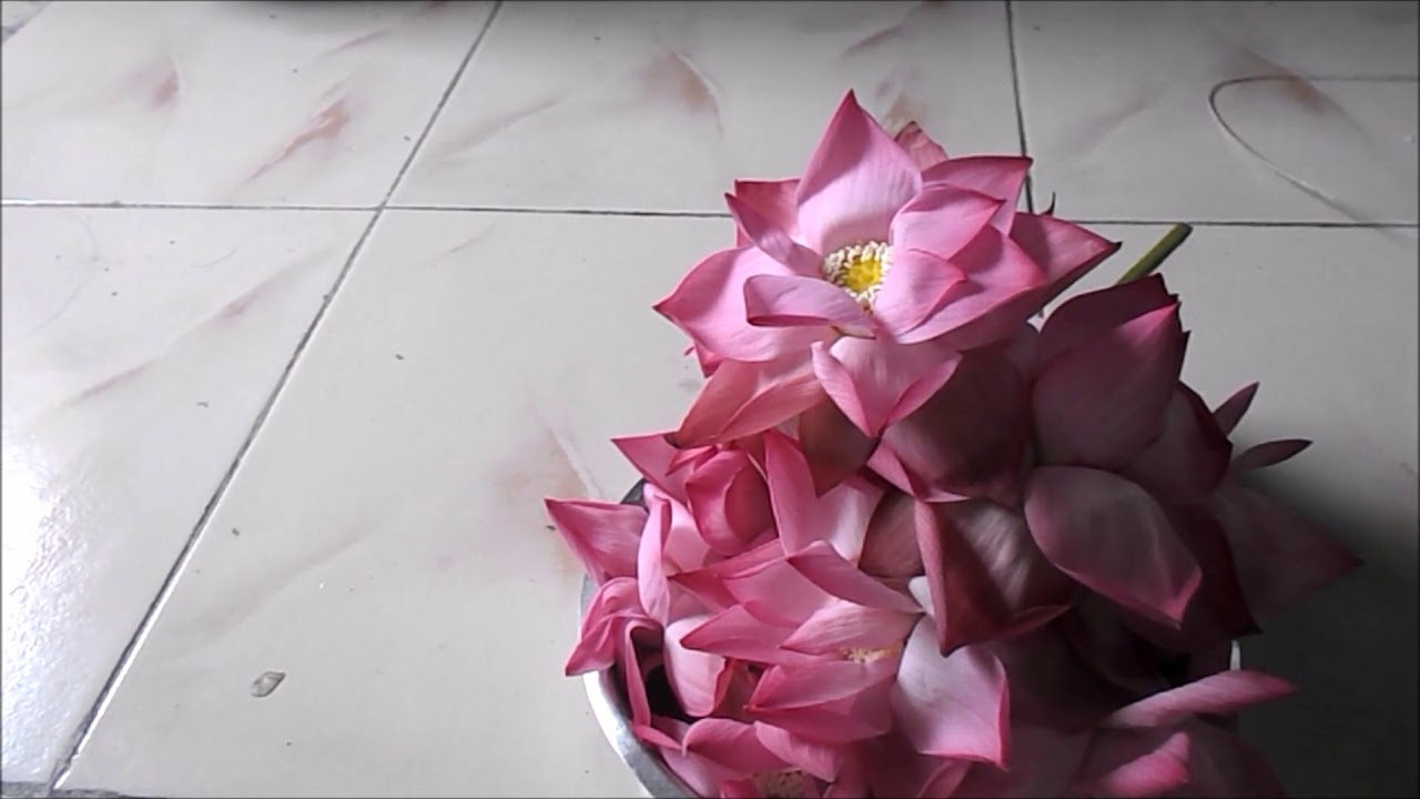 Lotus Flower Garland Thamarai Poo Malai For Friday Lakshmi