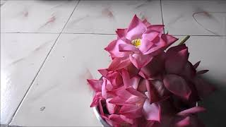Lotus flower garland | Thamarai poo malai | For Friday Lakshmi | Saraswathi | Pooja
