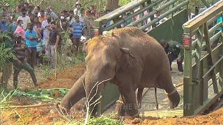 Relocation an aggressive elephant