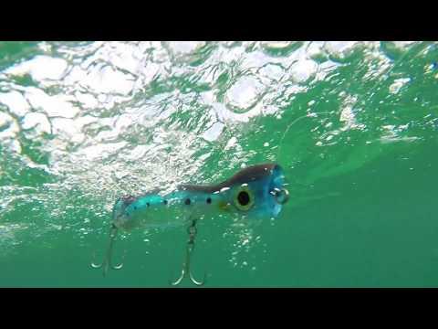 How Lures Swim: Williamson Jet Popper