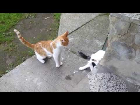 The most epic cat fight in 2018