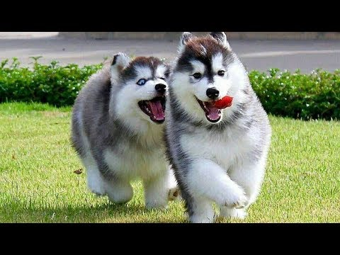 Cute Dogs - The cutest dogs in the world    Love ki