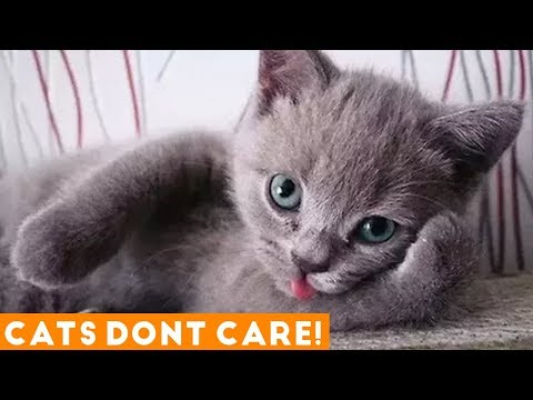 THESE CATS JUST DON'T CARE! TRY NOT TO LAUGH Ultimate Funny Cats March 2018 | Funny Pet Videos