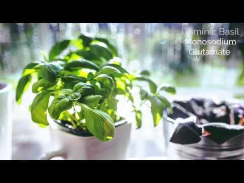 Dominic Basil | Monosodium Glutamate