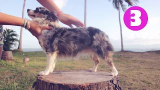 Ожирение у собак: как определить лишний вес? Часть 1 | Догмама