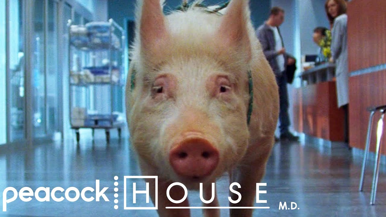 Relax, It's Kosher | House M.D.