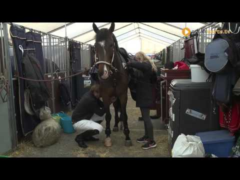 JBK Horse Show's stable master about 400 + horses in the stables