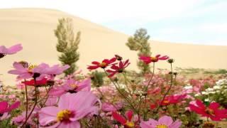 Летние цветы.Слайд шоу из фото(Летние цветы.Слайд шоу из фото http://youtu.be/KMOlogrpQZ0 ---------------------------------------------------------------------------------------- В мире цветов..., 2014-11-26T13:12:45.000Z)