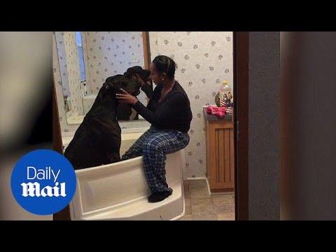 Џиновско куче не сака да се бања