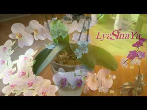 """Стресс после пересадки орхидеи. Что стало с """"реанимашкой""""..."""