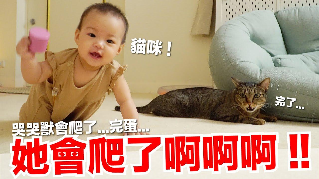 【小貓奴養成記EP15】她會爬了啊啊啊!哭哭獸會爬了...完蛋...
