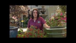 Gardening Tips With Plymouth Nursery: Container Quick Tip