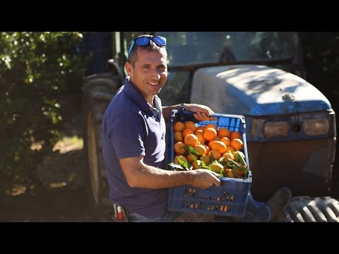Organic Clementine grower Alberto Torres | Abel & Cole
