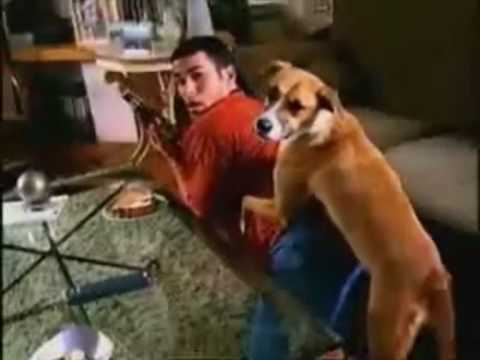 Bud light commercial bad dog youtube bud light commercial bad dog mozeypictures Choice Image